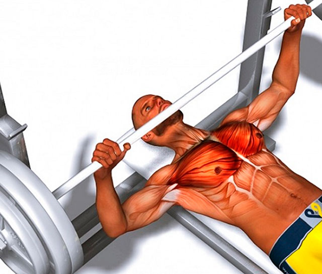 Проработка грудных мышц со штангой