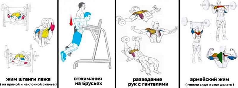 Упражнения для тренировки груди