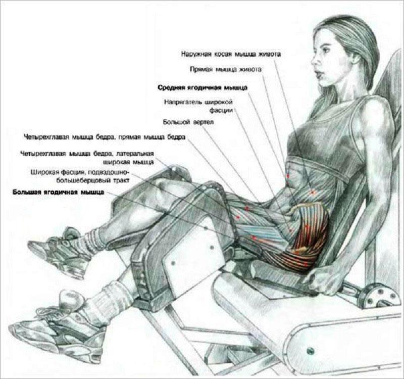 Группа мышц