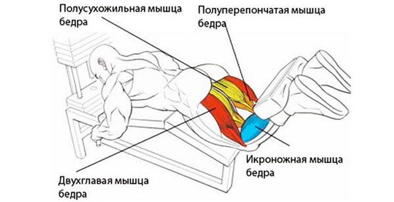 Преимущества сгибания ног в тренажере