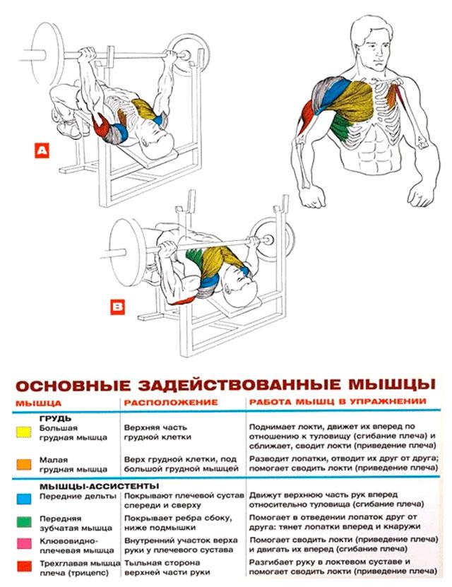Жим лёжа со штангой - основные задействованные группы мышц