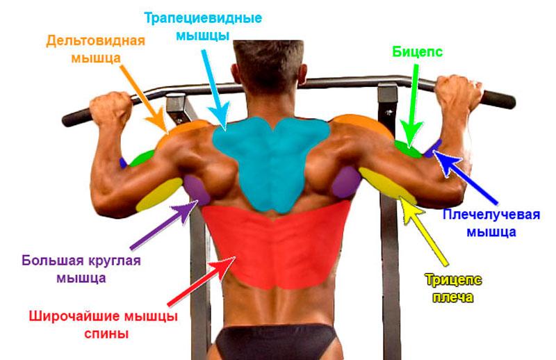 Подтягивания широким хватом на турнике – основные мышцы, задействованные в упражнении